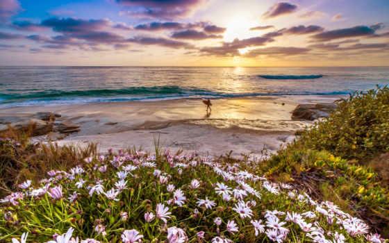 ocean, тихий, cvety, закат, california, побережье,
