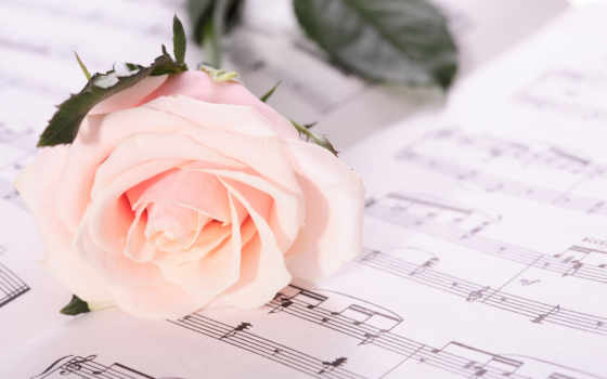 роза, красивые, под, ноты, старину, фотографий, лежит, поле, широкоформатные, природа,