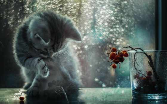 капелька, дневник, rosavetrov, lily, кошки, фотограф, фото, лунном, свете, немыкина,