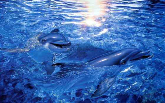 дельфины, море, арт, iphone, christian, lassen, riese, разрешением,