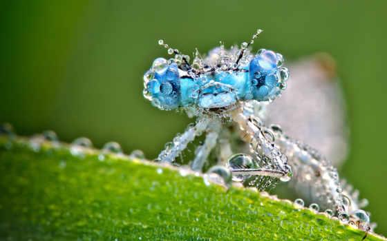 animal, dragonfly, абстрактные