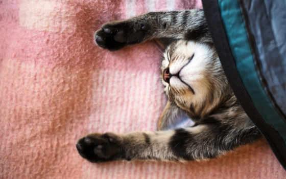 кот, спит, лапы, картинка, спать,