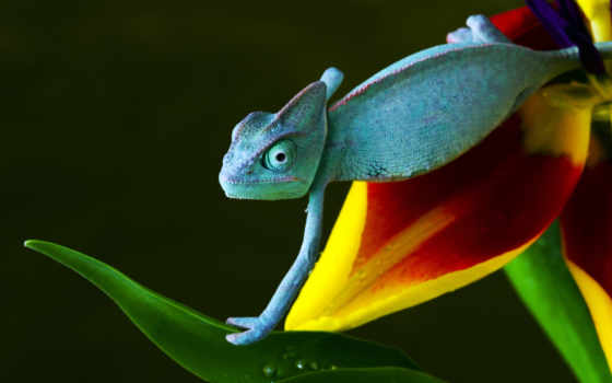 chameleon, избранные, добавить, daler, цветы, аккаунт, using, подразделы, мои, разделы,