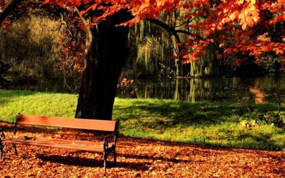 осень, park, дерево, скамейка, пруд,