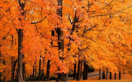 листва, осень, листьев, maple, дерево, деревьев, why, субстанция, multicolored, containing