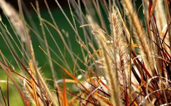 трава, большой, plan, dry, природа, гора, закат, пожаловаться