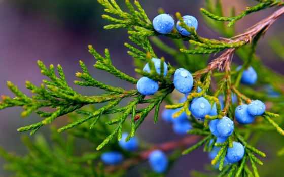 широкоформатные, макро, branch, природа, осень, windows, растение,