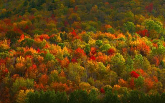 пасть, new, hudson, листва, york, долина, corbis, bing, zealand,