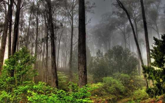 landscape, пейзажи -, лес, совершенно, trees, небо, свой, лесов,