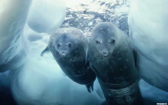 ни, себе, антарктиде