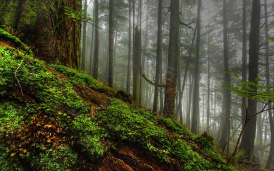 мох, дерево