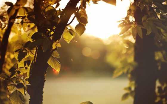 природа, категория, листья