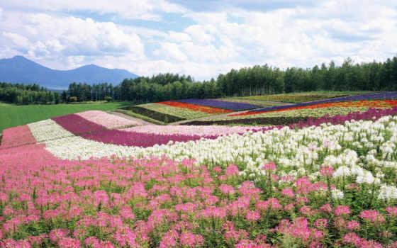 поле, цветы, лес