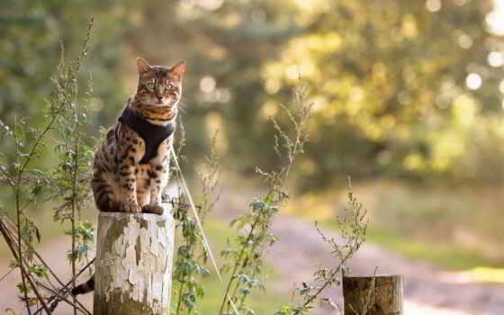 кот, природа, random
