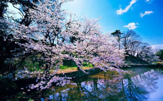 река, весна, landscape