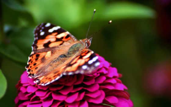 бабочка, цветы, розовый