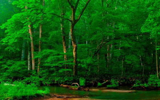 лес, река, trees, зелёный, альпы, фотообои, природа, берег,
