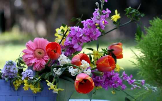güzel, resimler, çiçek, burada, resimleri, çiçekler, komik, duvar, kağıtları,