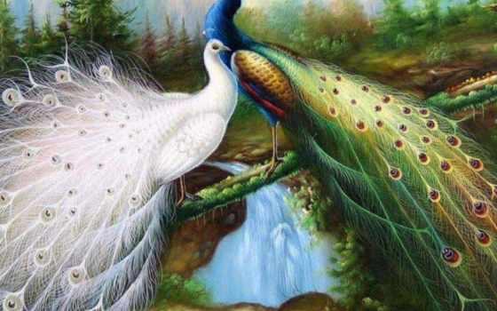 открытки, анимации, вышивка, peacock, павлинами, paon, красивые, вышивки, схема, павлины,