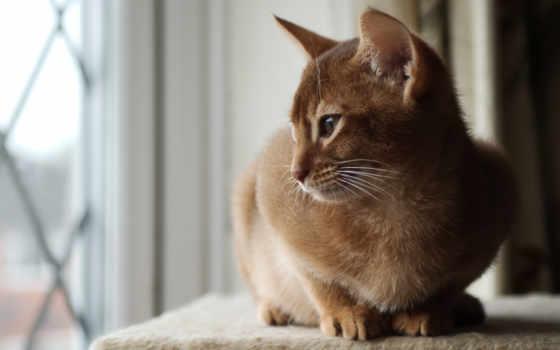 кот, zhivotnye, short, black, окно,