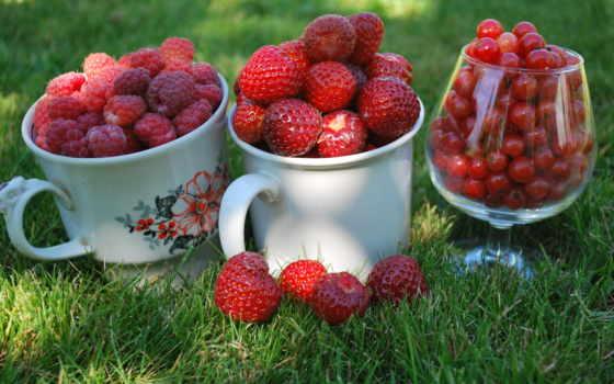 малина, клубника, ягода, red, трава, смородина, cup, glass, blackberry