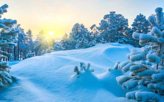 снег, winter, дерево, drift, природа, sun, pine, blue, иней, есть, снежинка