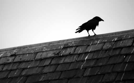 крыша, ворон, минимализм, картинка,