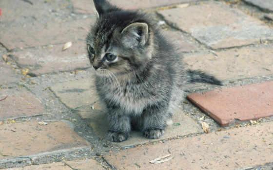 котенок, улице, котенка