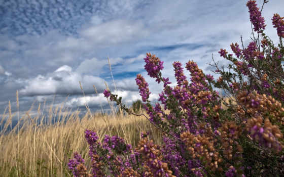 поле, травы, summer