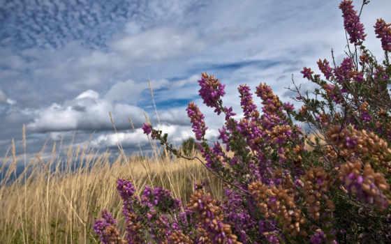 поле, травы, summer, clouds, со, растения, views,
