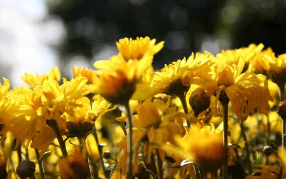 flowers, sun, цветы