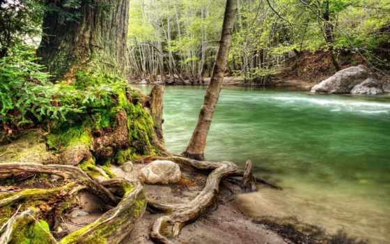 лесу, река, лес, природы, дерево, коряга, красивые,