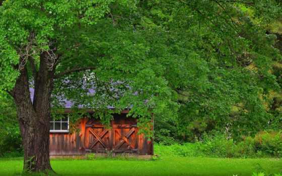 природа, осень, леса, янв, lodge, trees,