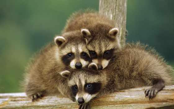 zhivotnye, забавные, животных, смешные, семья, наши,