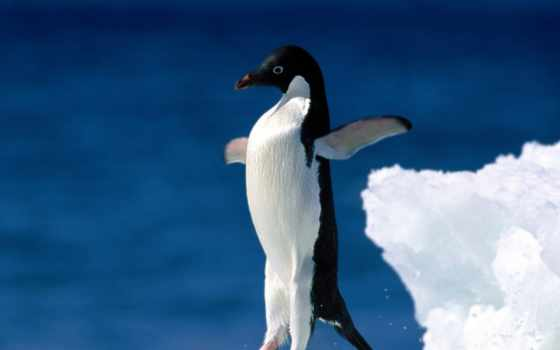 есть, was, ог, птица, пингвины, pingvin, сканворд, poncy, букв,