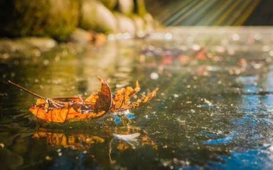 холод, осень, leaf, лед, природа, свет