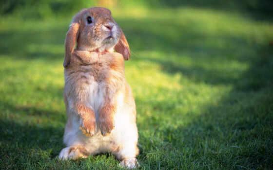 кролик, bunny, myself, cute, alive, funny, leg, point, заяц