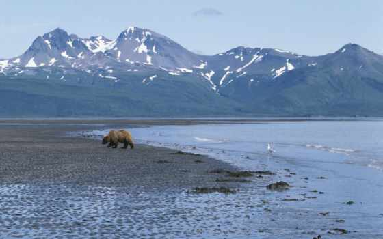 аляска, zhivotnye, emerald