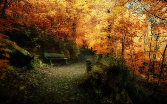ecran, fond, automne, paysage, pour, télécharger, pin, страница, forêt,