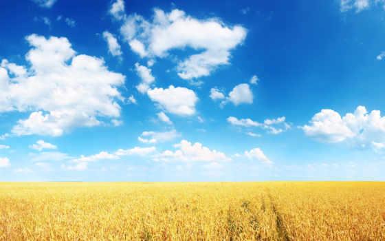 поле, пшеница, колосья, небо, пшеницы, oblaka, неба, fone, plain, нива,