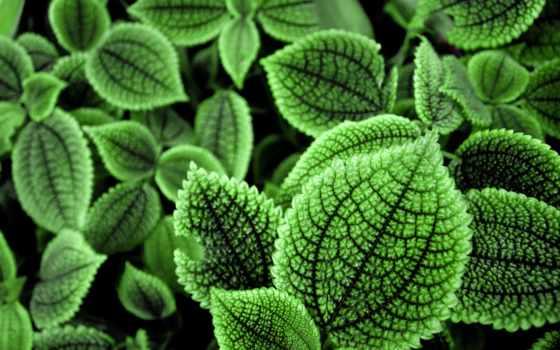 листва, зеленые, зелёный, экран, листы, листья, свет, телефона,