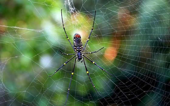 паук, макро,