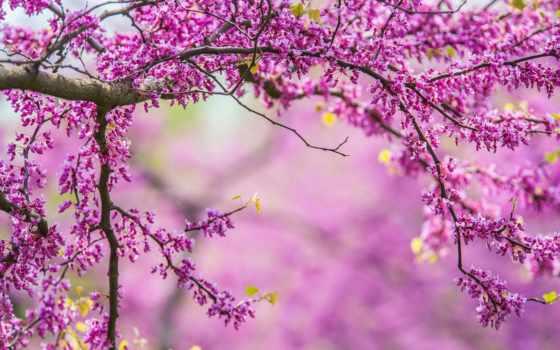 весна, красивые, cvety, природа, ветки, дерево, весной,