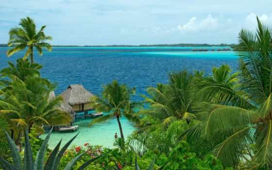 телефон, ocean, summer, пальмы
