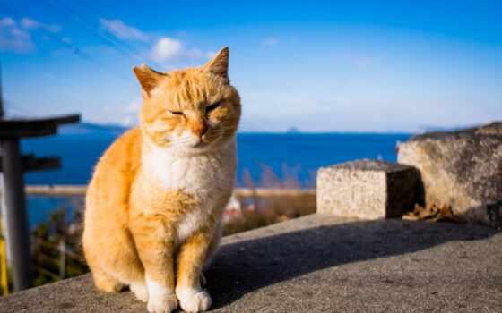 кот, summer, sun, который, ray, яркий, заменитель, sunshine, греться, exit, они