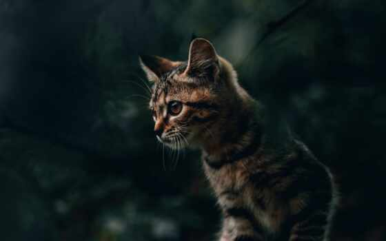 кот, котенок, striped, морда, спать, animal, дерево, down