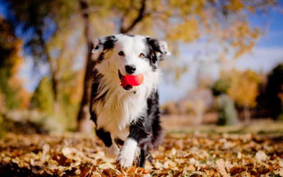 собаки, категория, размере