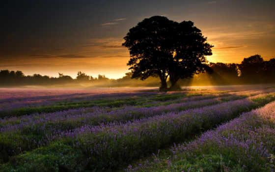 поле, рассвет, природа