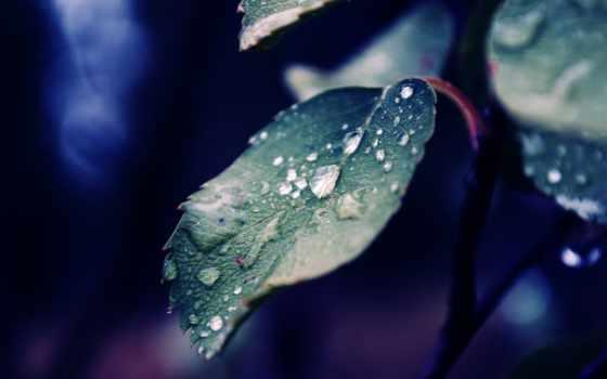 iphone, листья, дождь