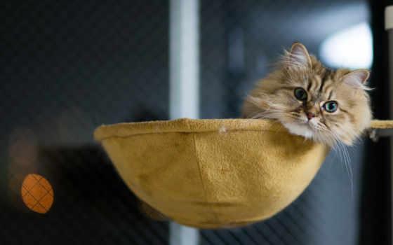 torode, кот, нравится